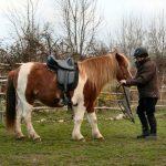Offre amz: 3d step cheval | Avis des utilisateurs
