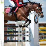En promo: Licol en nylon  de trait poney | Avis & prix