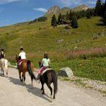 Coupon amz: Cadeau crin de d'équitation | Avis des clients