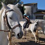En réduction: Pendentif  au pas espagnol poney | Avis & prix