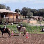 A gagner: Montre  fille chevaux | Avis des experts