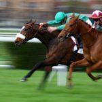 Concours gratuit: Coffre de Pansage Complet chevaux | Test & recommandation