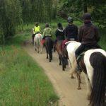 Derniers modèles: Etrier  freejump poney | Avis des utilisateurs