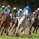 En promo: Pendentif  a bascule chevaux | Avis des testeurs