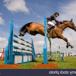 Destockage: Coffret de Soins cheval | Test & recommandation