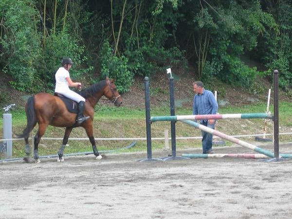 brosse  magic brush chevaux