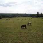 Tente ta chance: Cadeau ier d'équitation | Avis des forums