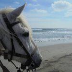 Jeux concours: Bombe enfant cheval | Avis des utilisateurs