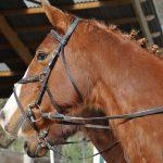 Code AMZ: Brosse a d'équitation | Pas cher